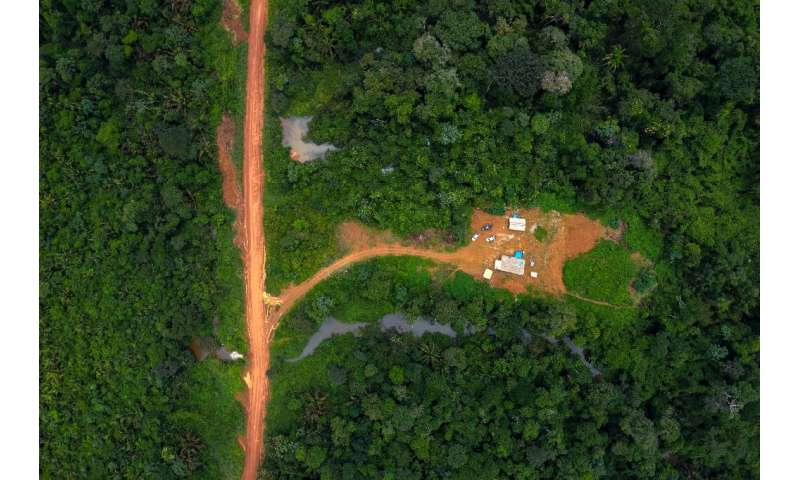 Since 2010, the area of Brazilian rainforest planted with soya—which is used to feed animals sold for meat—increased 45 percent