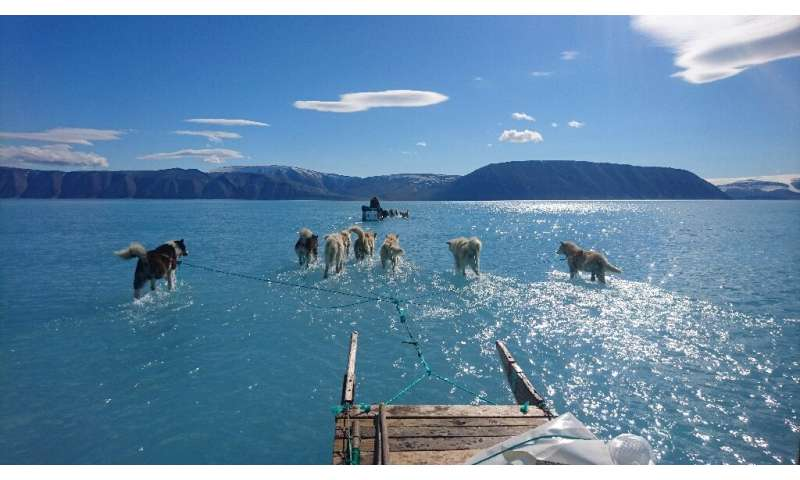 Sled dogs wade through water on melting sea ice during an expedition in North Western Greenland, as shown in this June 13, 2019