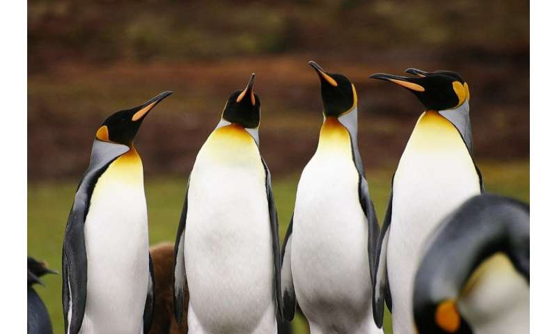 Social media data reveal benefits or threats to biodiversity by visitors to nature locations