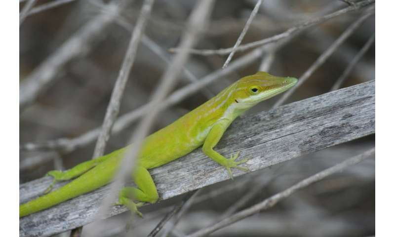 Study offers insight into biological changes among invasive species