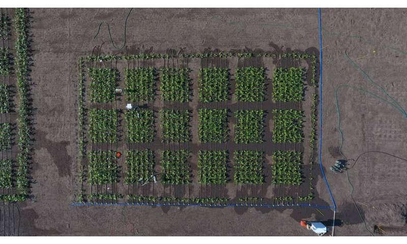 El estudio informa sobre los avances para medir las mejoras de las plantas para ayudar a los agricultores a impulsar la producción