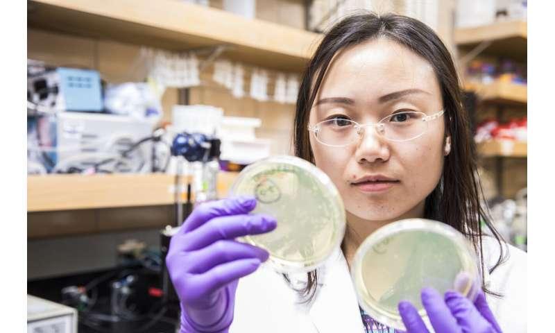 Prueba de cómo los desinfectantes de agua dañan los genes de resistencia a los antibióticos