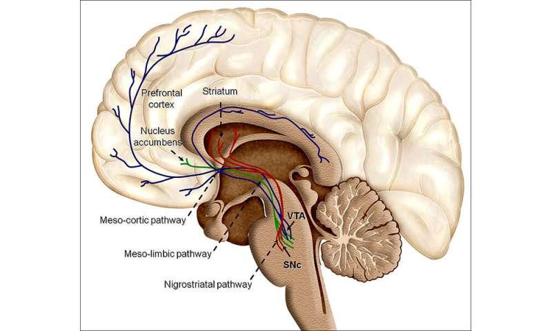 The adolescent brain isn't so bad, really