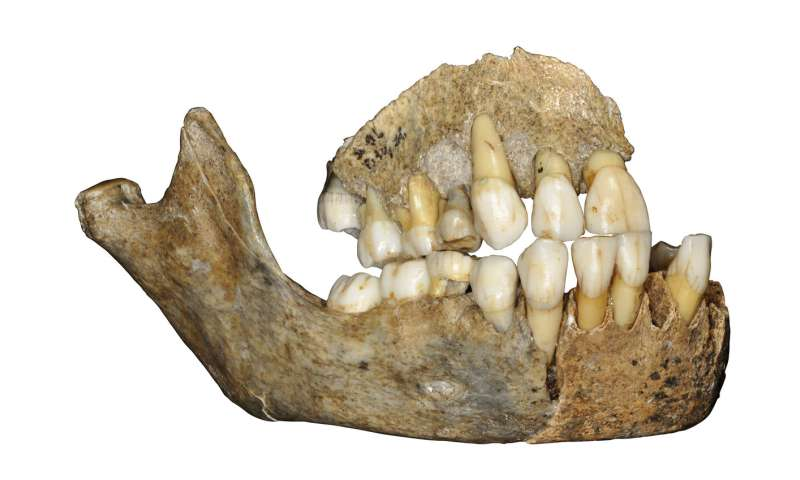 The ancient history of Neandertals in Europe