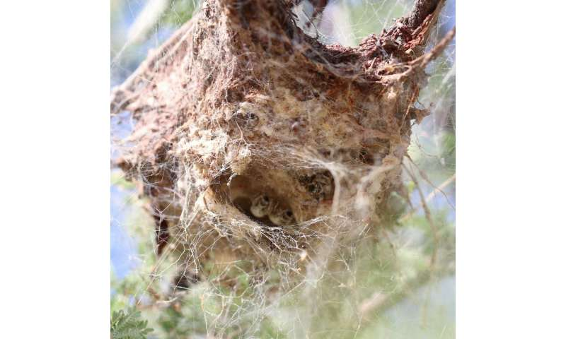 The most aggressive spider societies are not always the ones that flourish