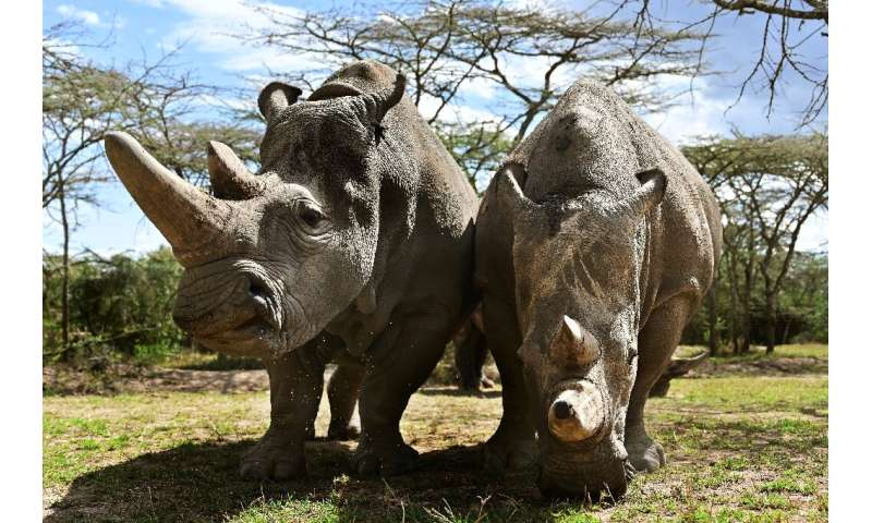 The sanctuary houses the world's last two northern white rhinos, Najin and her daughter Fatu, seen in their enclosure in the pri
