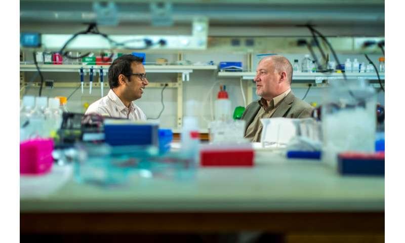 Tiny change has big effects, reverses prediabetes in mice