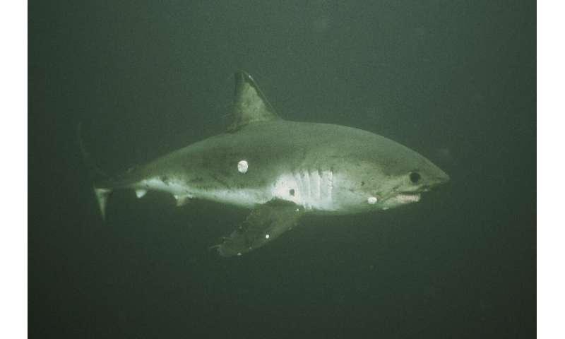 Tunas, sharks and ships at sea