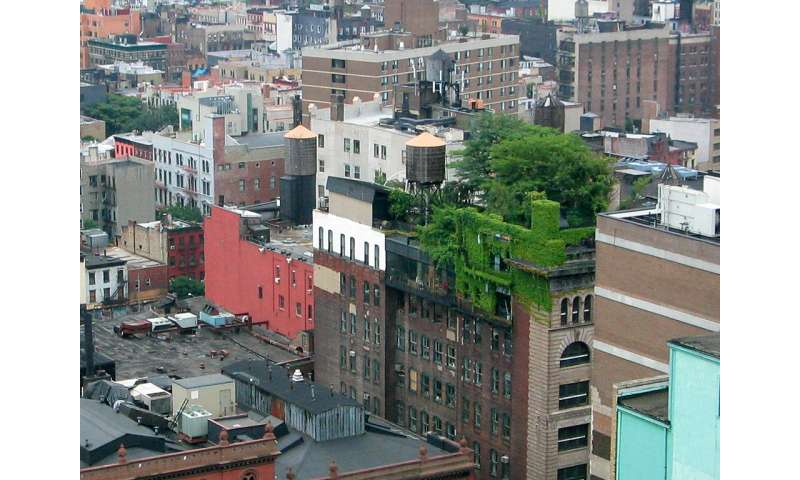 Two birds, one stone: Green roof gardening in the city