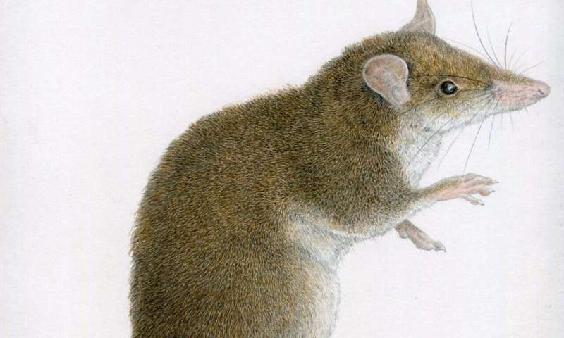 Two new species of 'tweezer-beaked hopping rats' discovered in Philippines