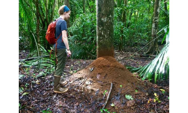 UM researchers: Leafcutter ants emit as much N2O as wastewater treatment tanks