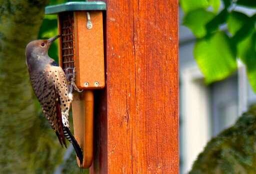 When managing birdfeeders, think bird health and safety