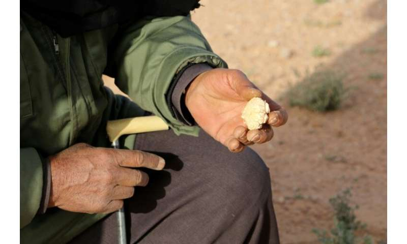 White truffles are coveted as a delicacy in Libya nad abroad, especially in the Gulf countries