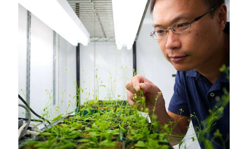 Machine learning unlocks plants' secrets