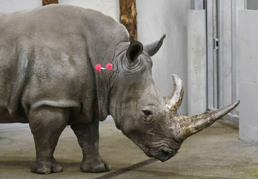 Scientists fine-tune method to save rhinos