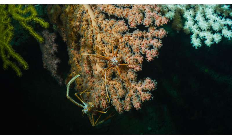 New species of deep-sea corals discovered in Atlantic marine monument