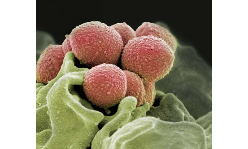 Researchers discover a trigger that turns streptococcal infections into a carnivorous disease