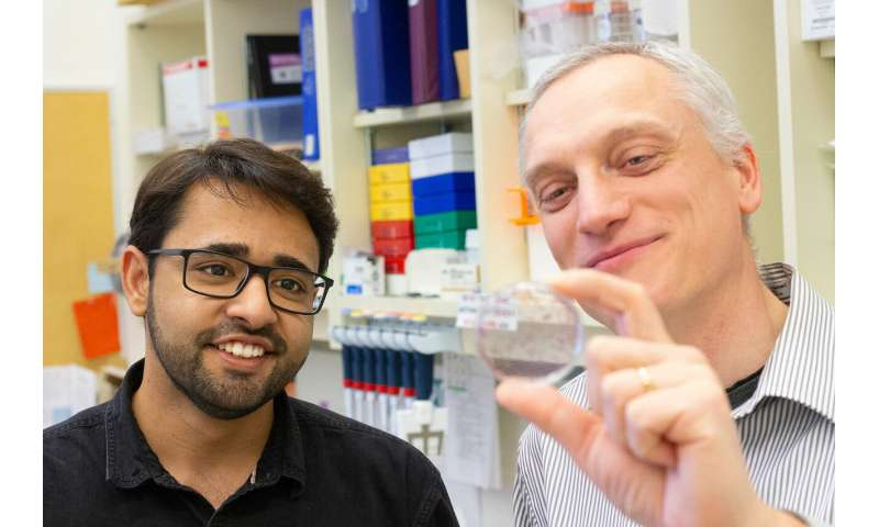 Researchers target metastasis in fight against cancer