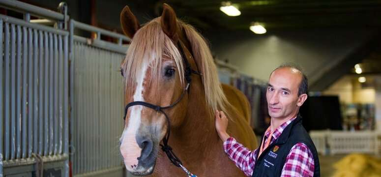 Researcher studies new camera-in-a-capsule method of examining a horse's gut