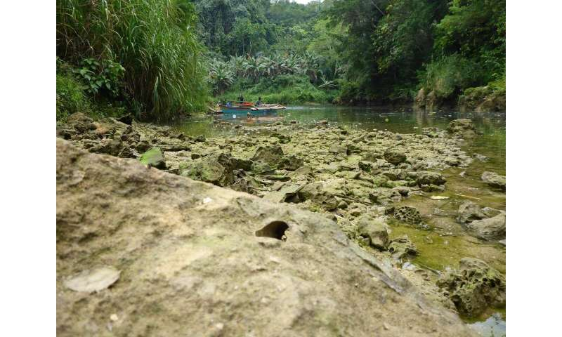 New species of rock-eating shipworm identified in freshwater river in the Philippines
