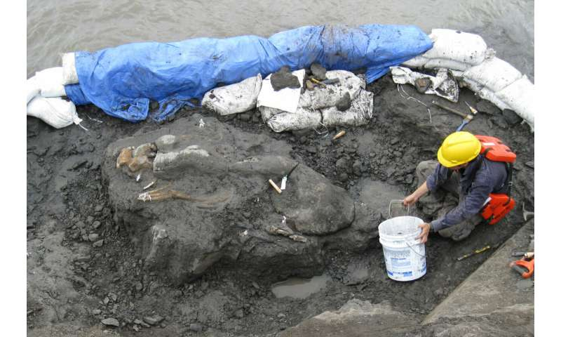 20-million-year-old tusked sea cow is Central America's oldest marine mammal