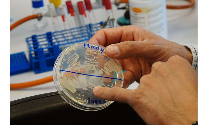 A combination of two bacteria genera improves plants' health