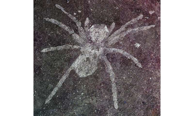 Ancient spider fossils, surprisingly preserved in rock, reveal reflective eyes