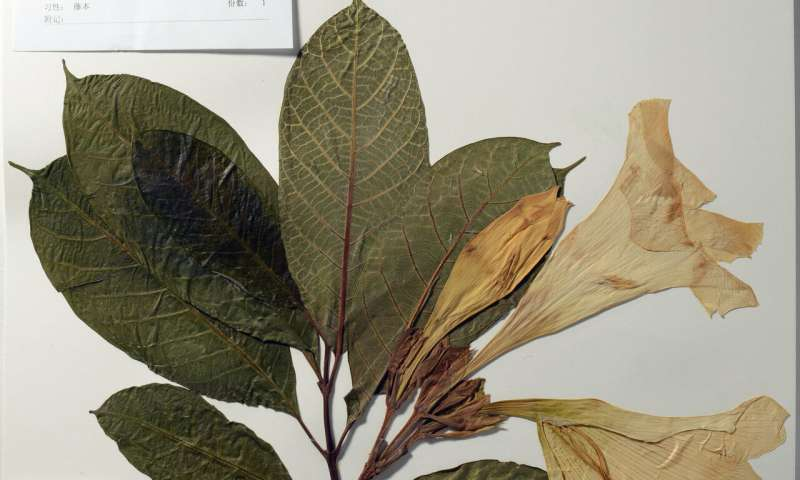 An entire botanical garden of genomes