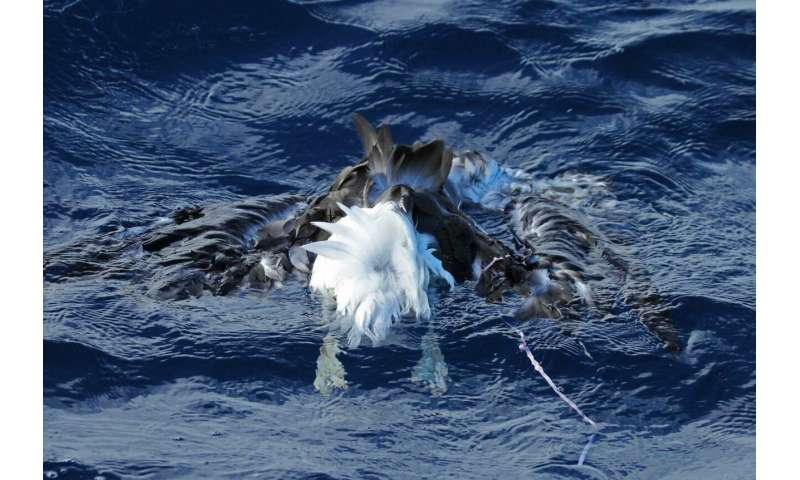 Balloons the number 1 marine debris risk of mortality for seabirds