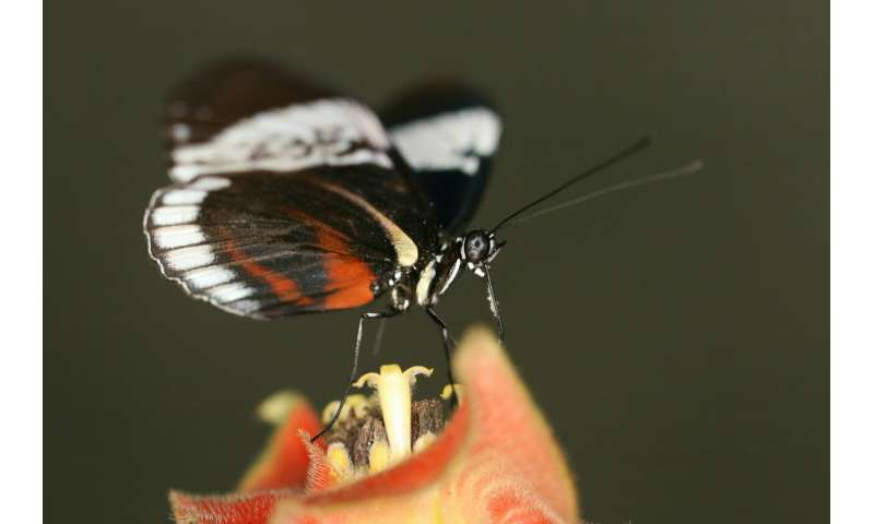 Butterflies are genetically wired to choose a mate that looks just like them