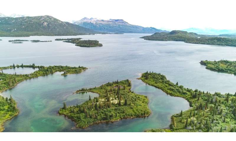 Chemical records in teeth confirm elusive Alaska lake seals are one of a kind