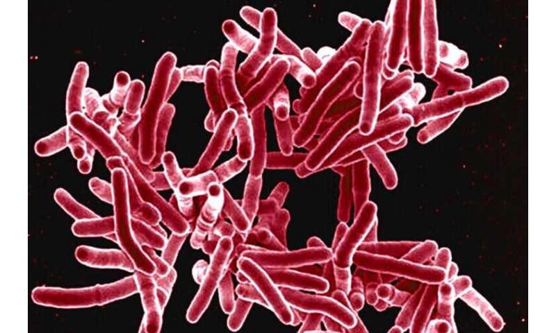 Drug-resistant tuberculosis reversed inlab