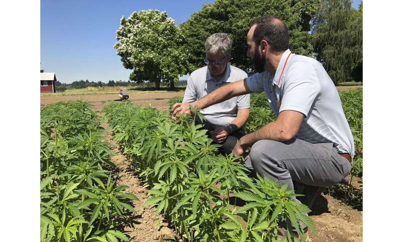 Growers hope standards bring order to hemp industry 'mess'