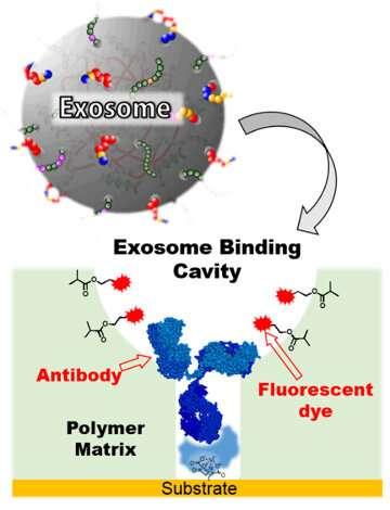Highly sensitive method to detect potential cancer biomarker