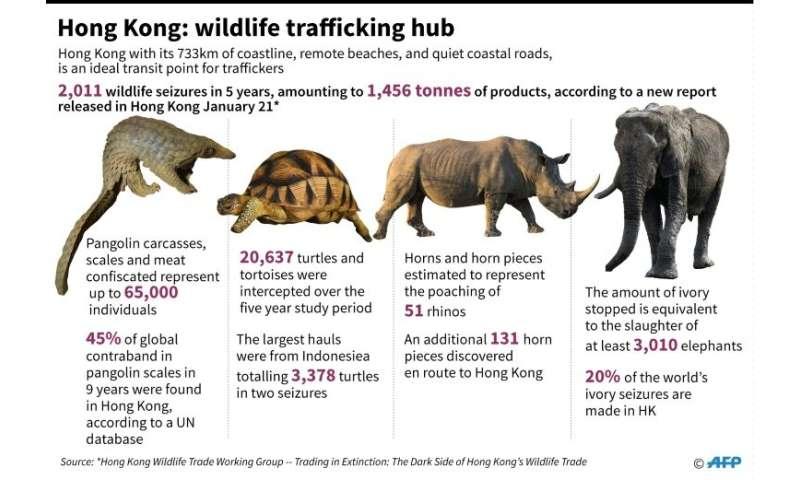 Hong Kong wildlife