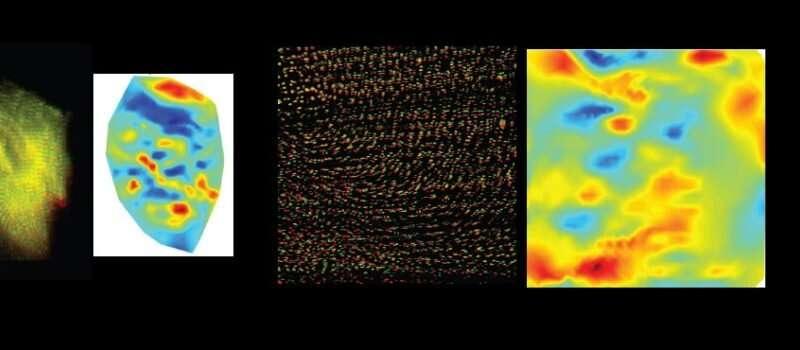 Innovative mechanobiology research expands understanding of cells