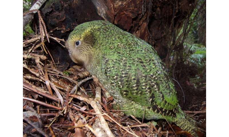 It would take 50 million years to recover New Zealand's lost bird species