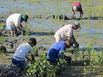 Mangrove patches deserve greater recognition no matter the size