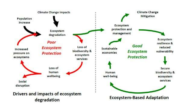 Nature-based solutions: the missing ingredient in climate adaptation?