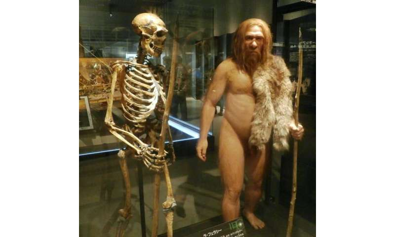 Neanderthals were sprinters rather than distance runners, study surprisingly suggests