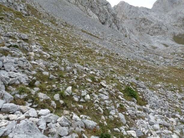 New perennial brome-grass from Iberian Peninsula named after Picos de Europa National Park
