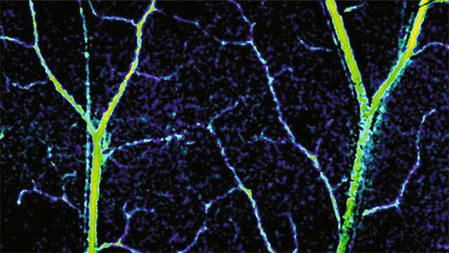 New technology gives unprecedented look inside capillaries