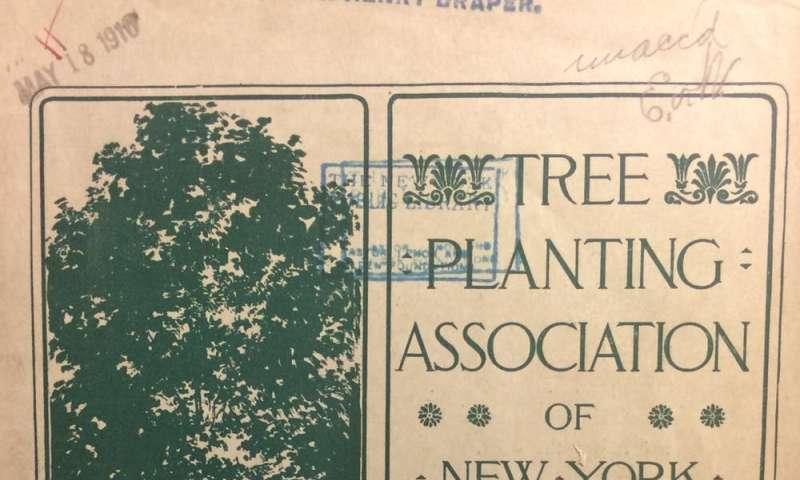 No hace mucho tiempo, las ciudades estaban hambrientas de árboles.