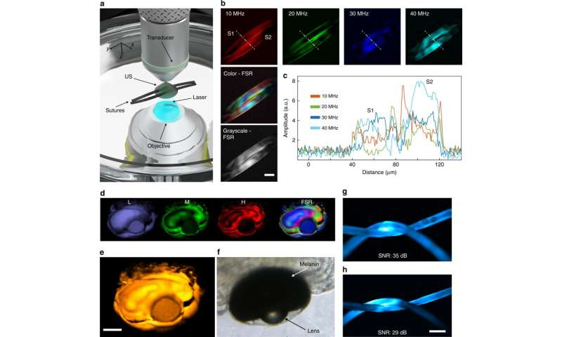 **Optoacoustic Microscopy at Multiple Discrete Frequencies