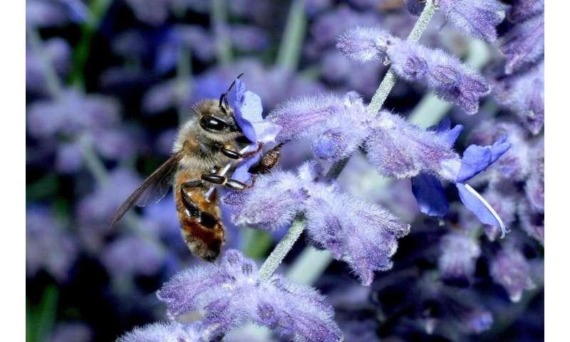 El cóctel de pesticidas puede dañar a las abejas
