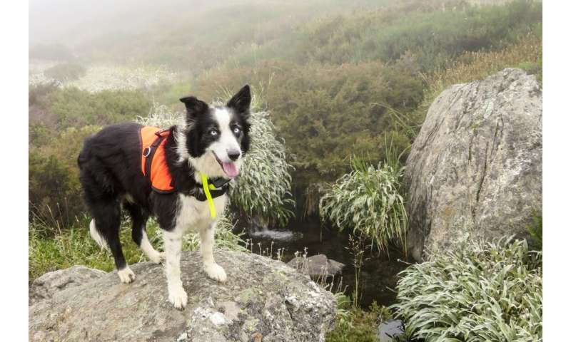 ¡Sentar!  ¡Buscar!  ¡Volar!  Científicos adiestran perros para detectar insectos en peligro de extinción