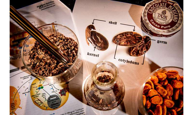 Study: Phenols in cocoa bean shells may reverse obesity-related problems in mouse cells