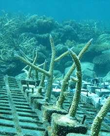 Un estudio demuestra la importancia de la caca de aves para mejorar el crecimiento del coral