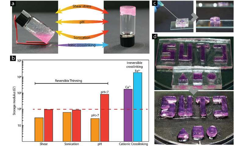 SUTD researchers develop a hydrogel for enhanced cell encapsulation and delivery