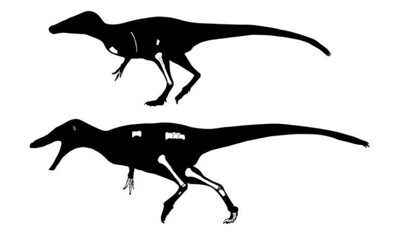 Thai dinosaur is a cousin of T. rex
